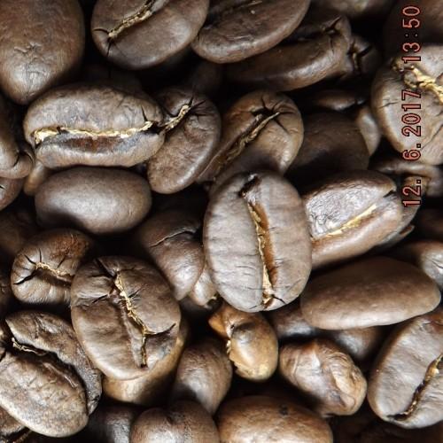 Honduras Maragogype